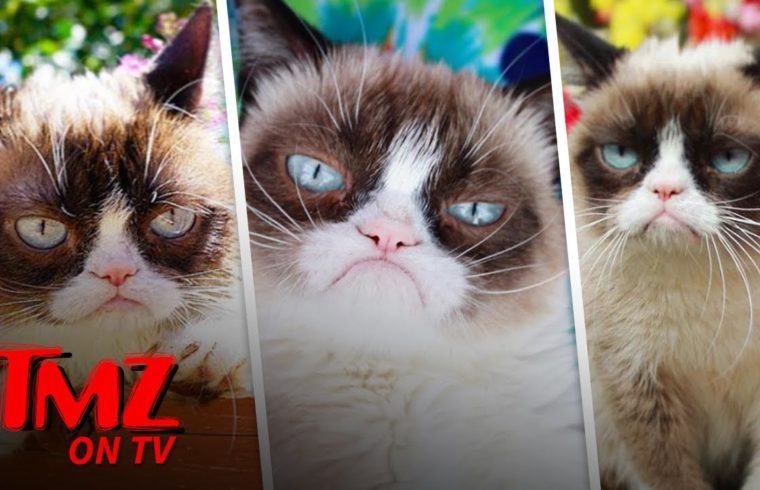 Grumpy Cat Has Died | TMZ TV 1